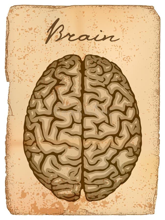 Menselijke hersenen, oud manuscript. vector illustratie