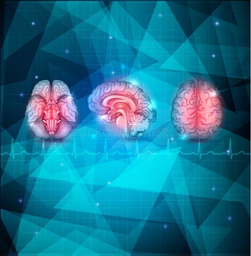 Menselijke hersenenachtergrond royalty-vrije illustratie