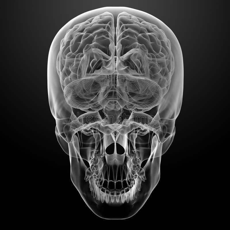 Menselijke hersenenröntgenstraal vector illustratie