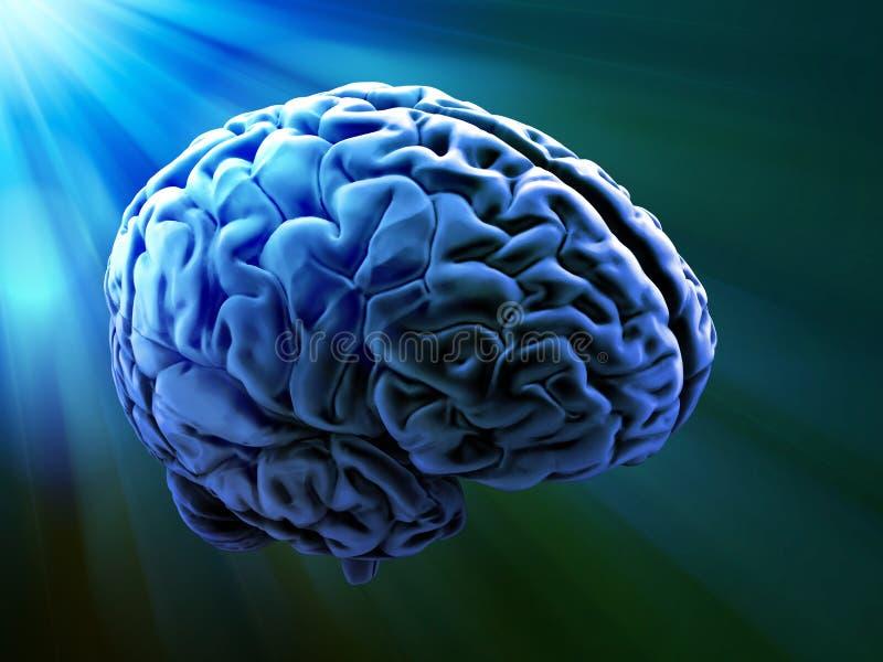 Menselijke hersenensamenvatting royalty-vrije illustratie