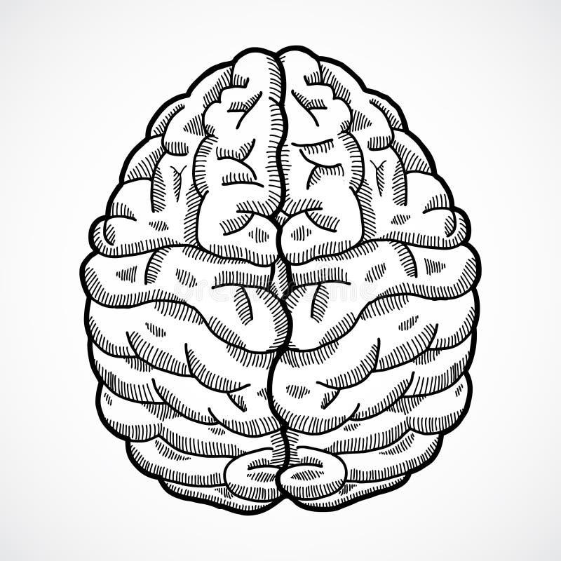Menselijke hersenenschets royalty-vrije illustratie