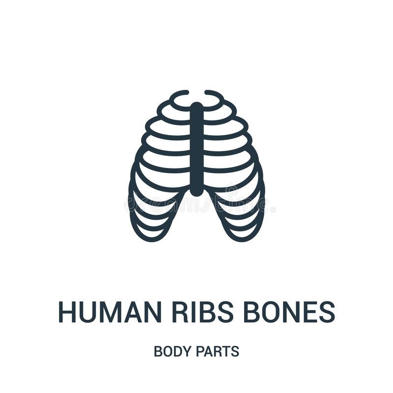 menselijke het pictogramvector van ribbenbeenderen van lichaamsdeleninzameling Dunne van het de beenderenoverzicht van lijn mense royalty-vrije illustratie
