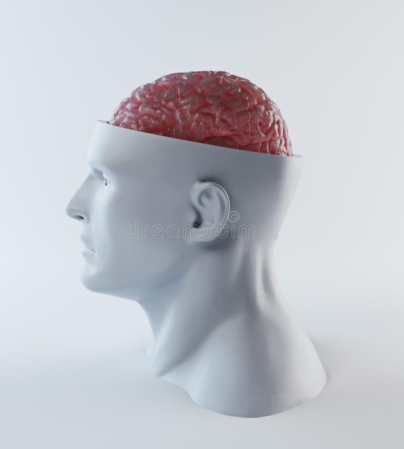 Menselijke Intelligentie royalty-vrije stock foto's