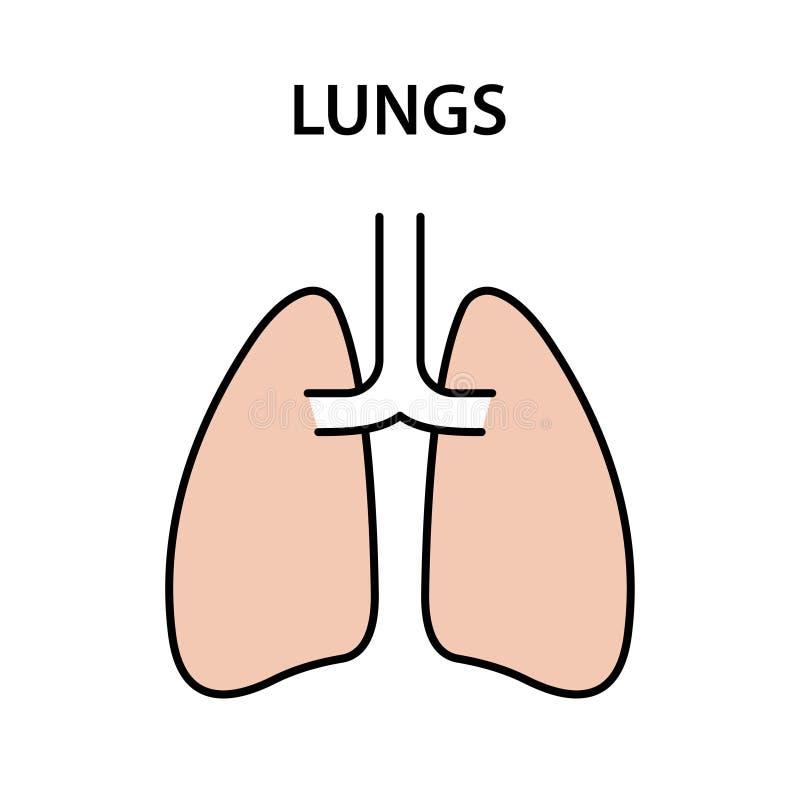 Menselijke Interne Orgaanlongen Gezonde sterke organen Vector illustratie royalty-vrije illustratie