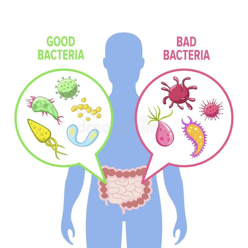 Menselijke intestinale flora vectordieillustratie van achtergrond wordt geïsoleerd vector illustratie