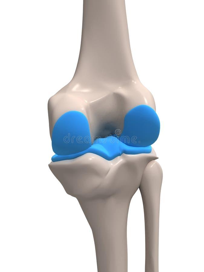 Menselijke knie stock illustratie