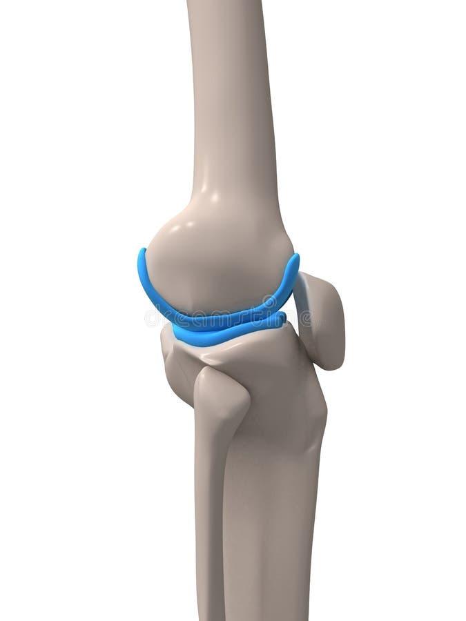Menselijke knie vector illustratie