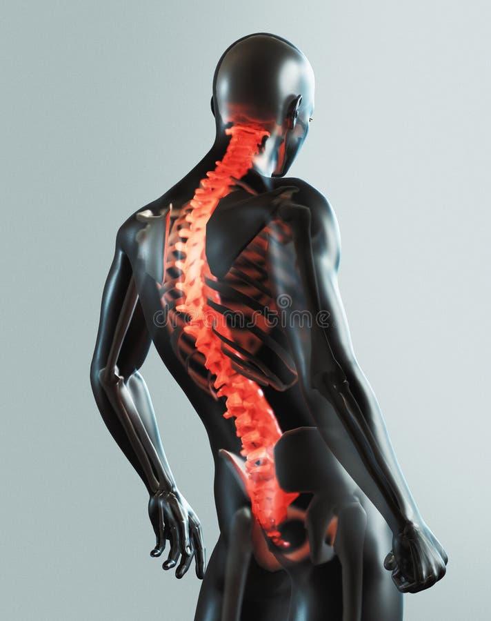 Menselijke lichaamsdelen, het x ray, 3d teruggeven stock illustratie