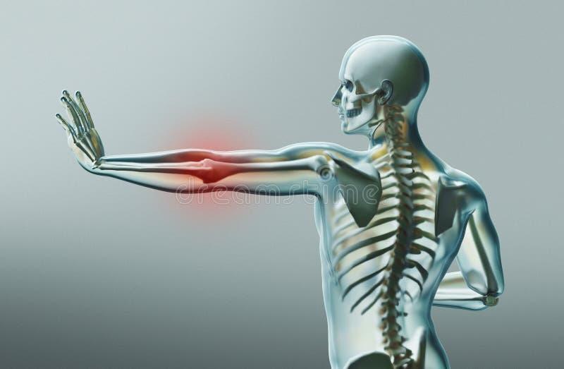 Menselijke lichaamsdelen, het x ray, 3d teruggeven vector illustratie