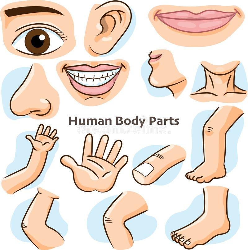 Menselijke lichaamsdelen - Vectorillustratie stock illustratie