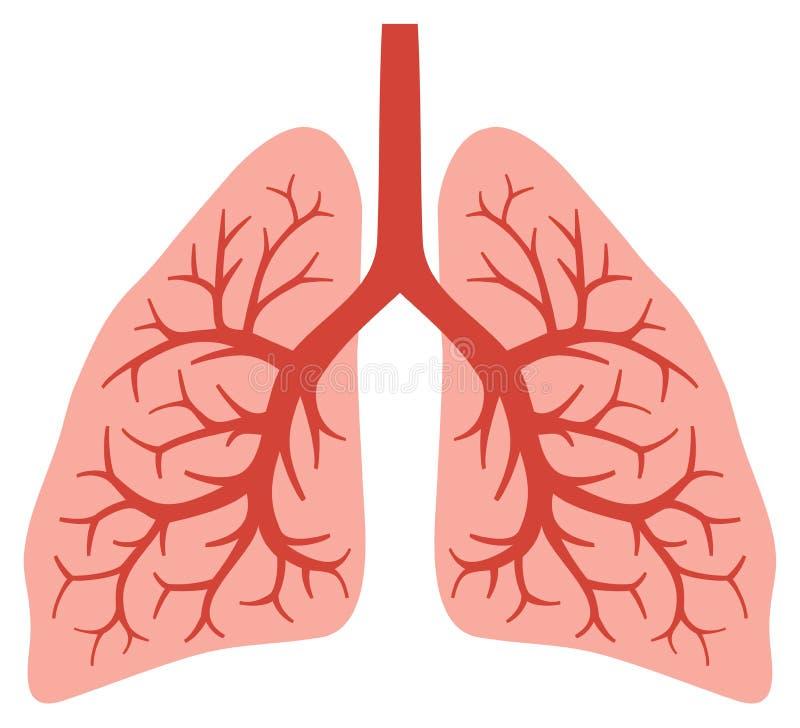 Menselijke longen royalty-vrije illustratie