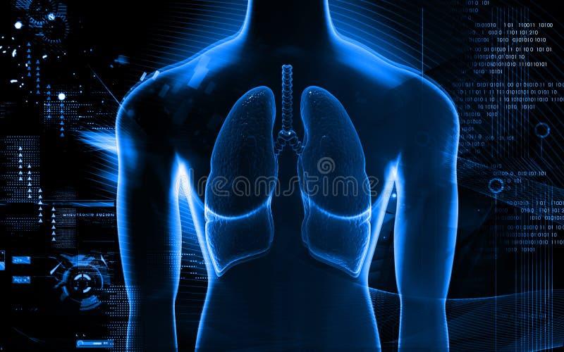 Menselijke Longen vector illustratie