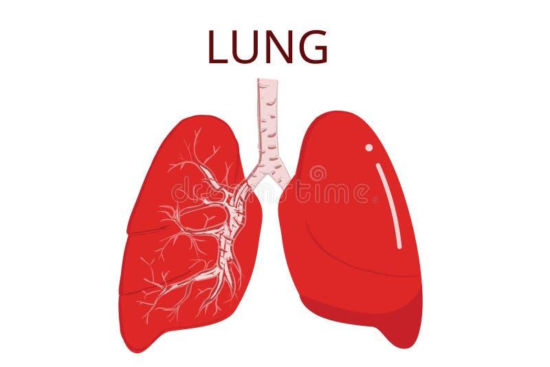 Menselijke longen, geïsoleerde vectorillustratie op Witte achtergrond royalty-vrije illustratie