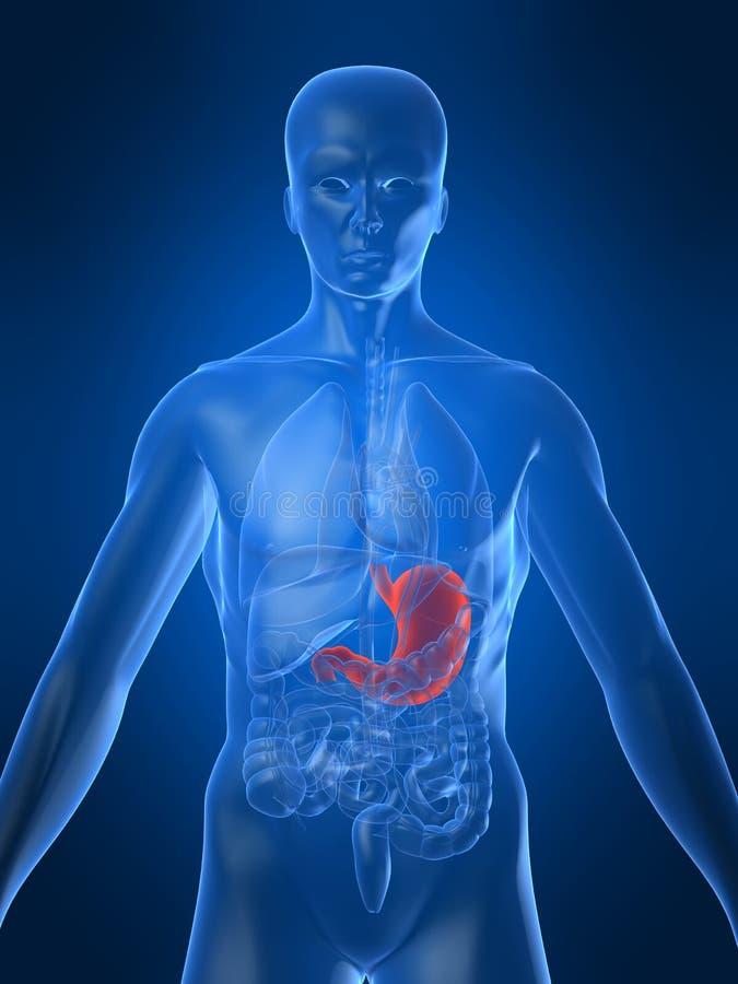Menselijke maag stock illustratie