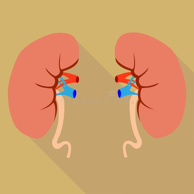 Menselijke Nieren royalty-vrije illustratie