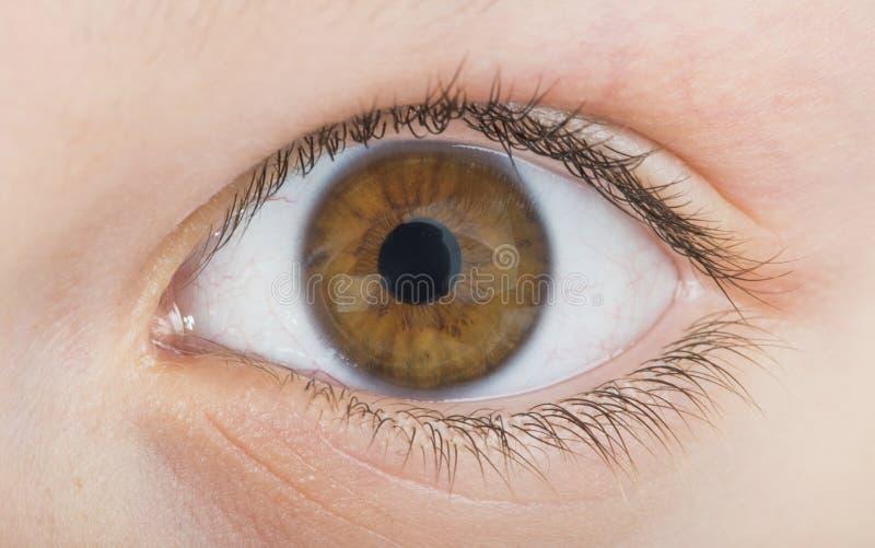 Menselijke oog bruine kleur stock afbeeldingen