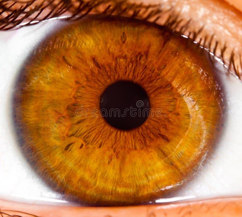 Menselijke oog dichte omhooggaand? stock afbeelding