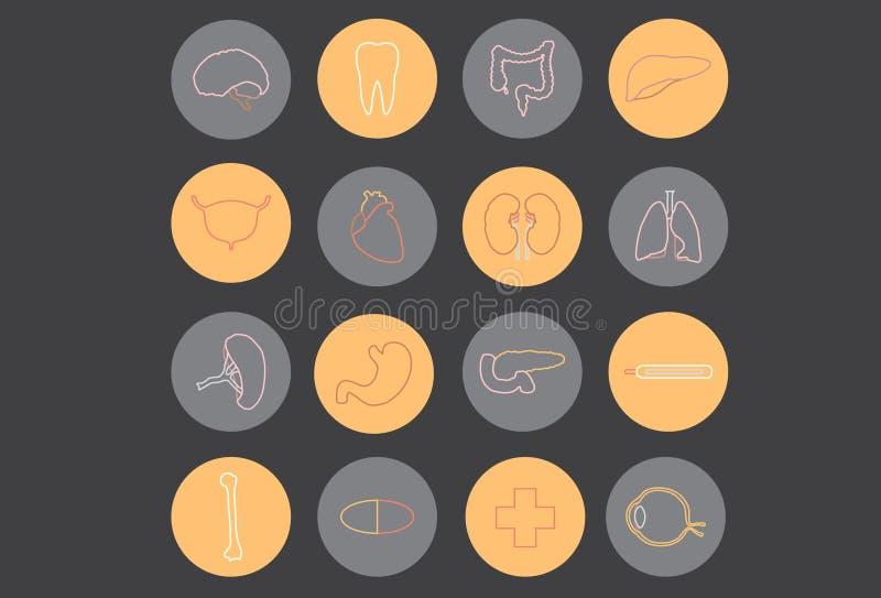 Menselijke organen - Geneeskunde stock afbeelding