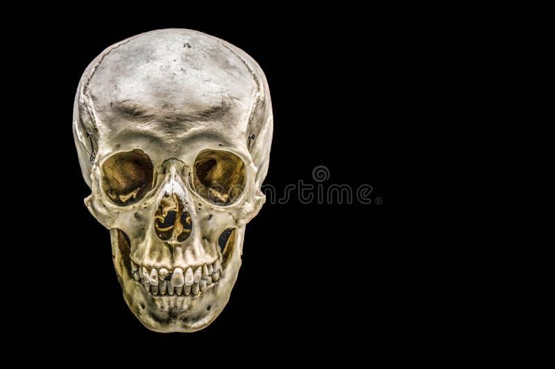 Menselijke schedel die op zwarte achtergrond wordt ge?soleerdl Anatomisch correct menselijk schedelmodel met griezelige details v stock fotografie