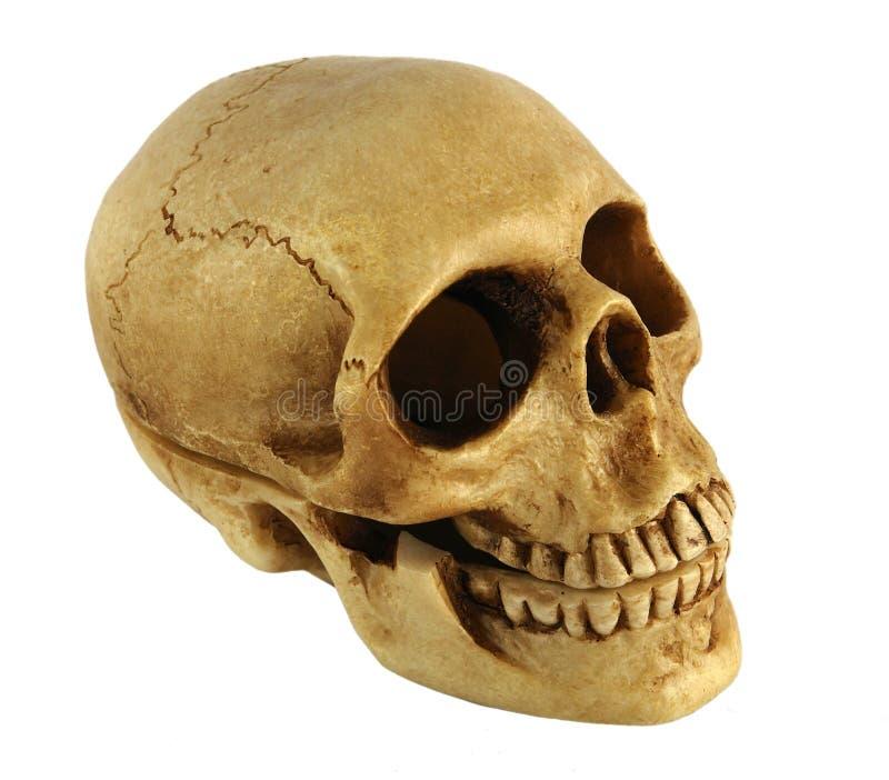 Menselijke schedel Gevormde Kist stock foto