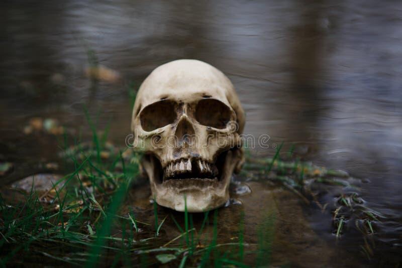 Menselijke schedel op de oppervlakte van het water in de rivier onder het gras en de algen stock afbeelding