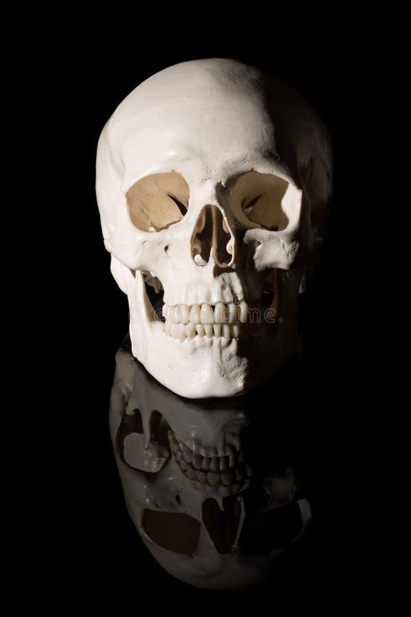 Menselijke schedel op een zwarte achtergrond stock foto's