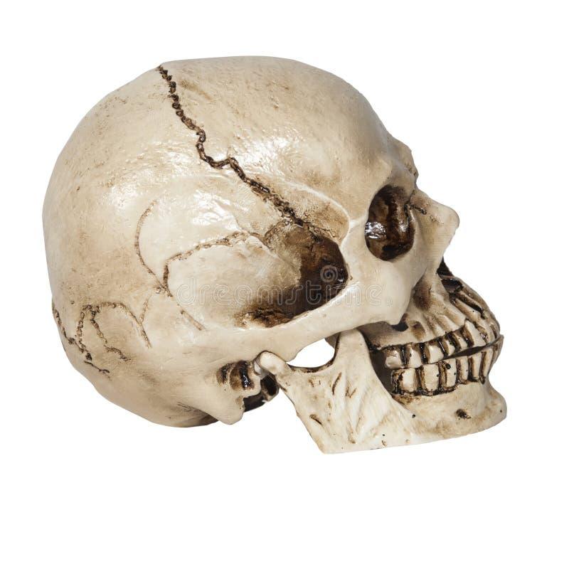 Menselijke schedel op geïsoleerd stock foto