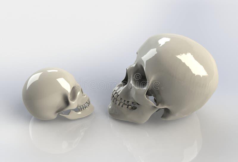 Menselijke schedel op geïsoleerde witte achtergrond royalty-vrije illustratie
