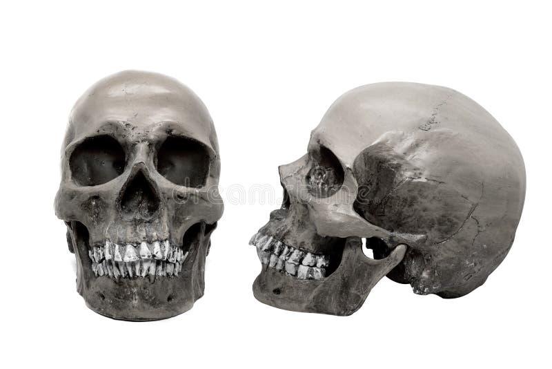Menselijke schedel op geïsoleerde witte achtergrond stock foto's