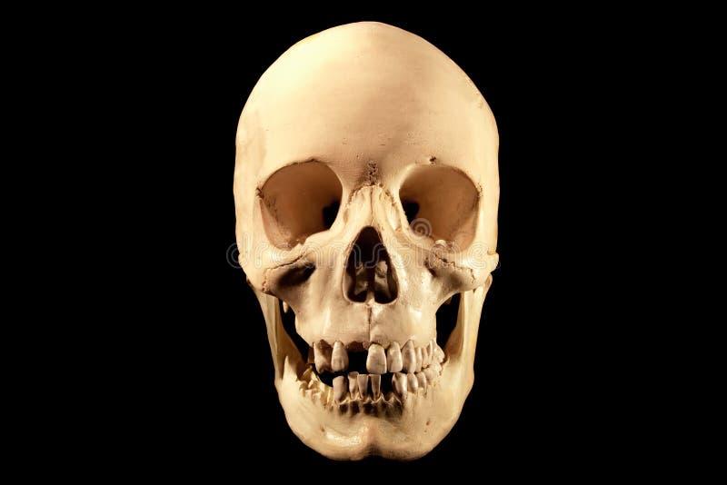 Menselijke schedel op zwarte royalty-vrije stock afbeelding