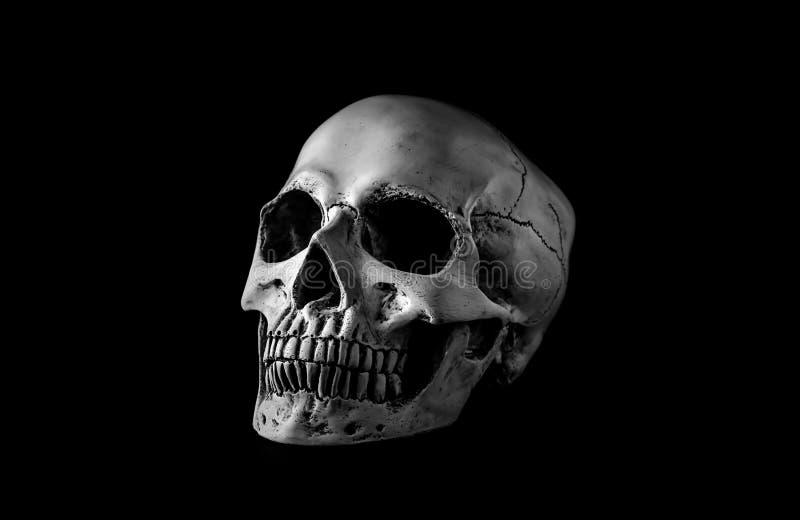 Menselijke schedel op zwarte achtergrond royalty-vrije stock afbeelding