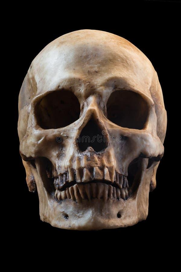Menselijke schedel op zwarte achtergrond royalty-vrije stock fotografie