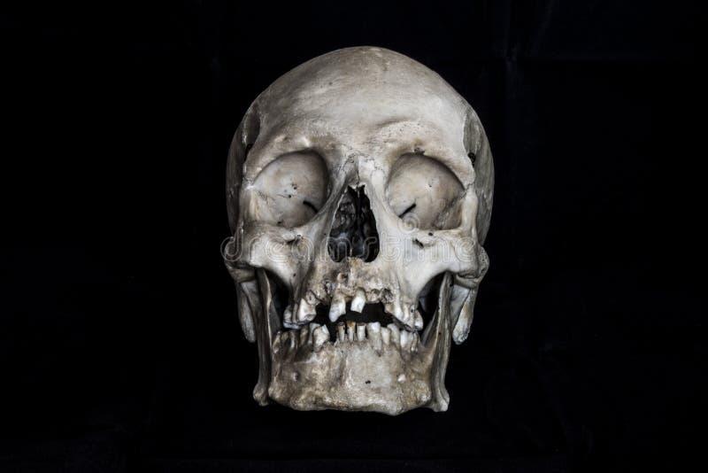 Menselijke schedel op zwarte achtergrond stock foto