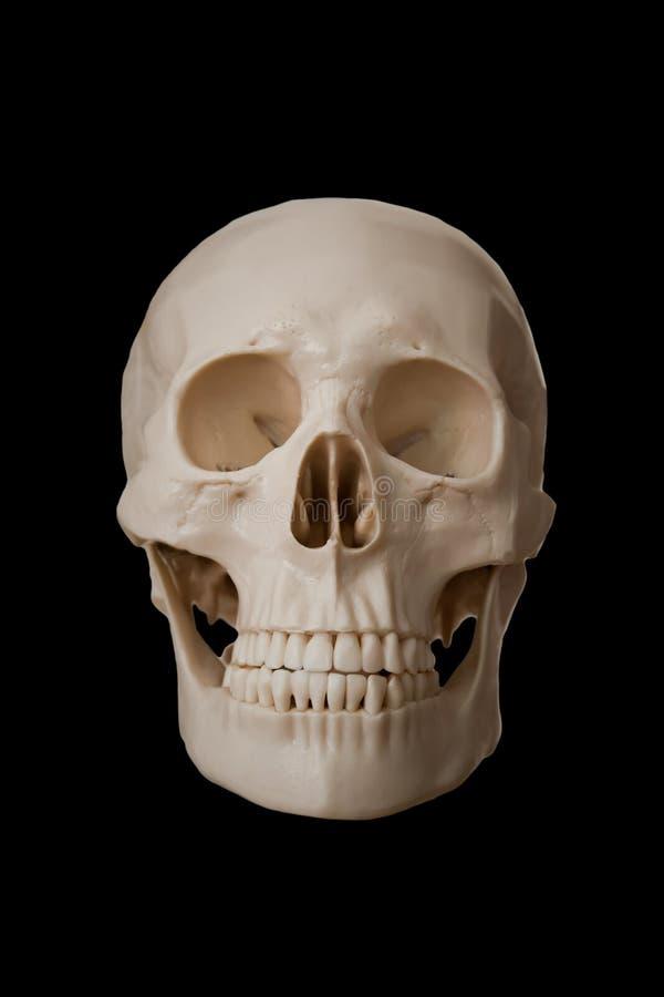 Menselijke schedel tegen geïsoleerd op zwarte achtergrond stock afbeelding