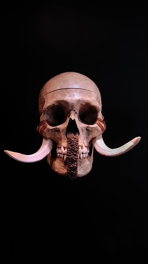 Menselijke schedel van Papoea-Nieuw-Guinea stock fotografie