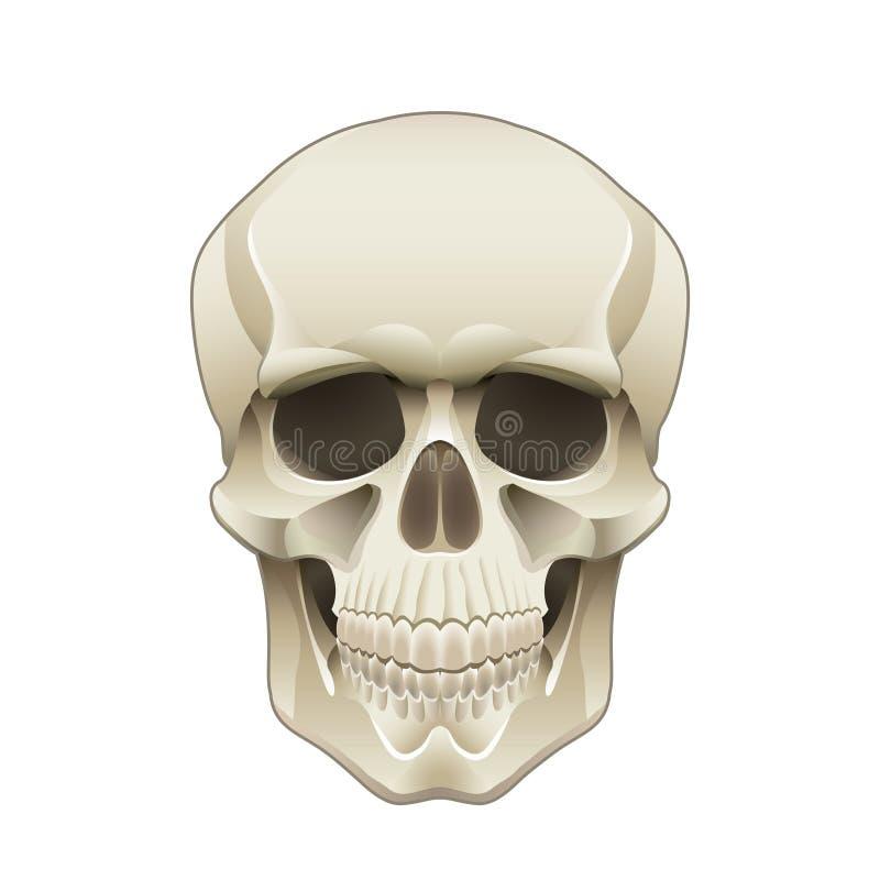 Menselijke schedel vectorillustratie stock illustratie