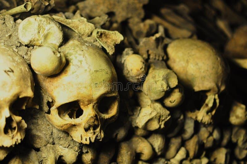 Menselijke schedels in de catacomben van Parijs, Frankrijk stock afbeeldingen