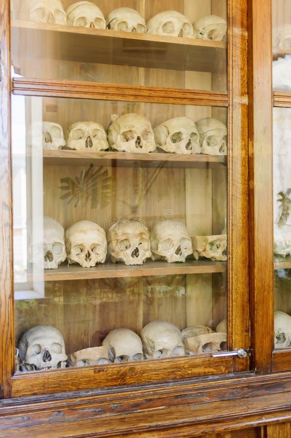 Menselijke schedels in de kast achter het glas Materiaal in een medische universiteit stock foto's