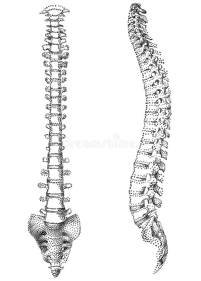 Menselijke stekel   vector illustratie