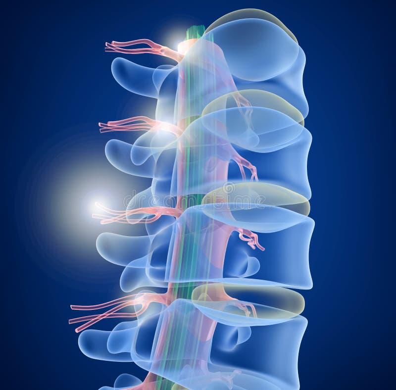 Menselijke Stekel x-ray mening vector illustratie