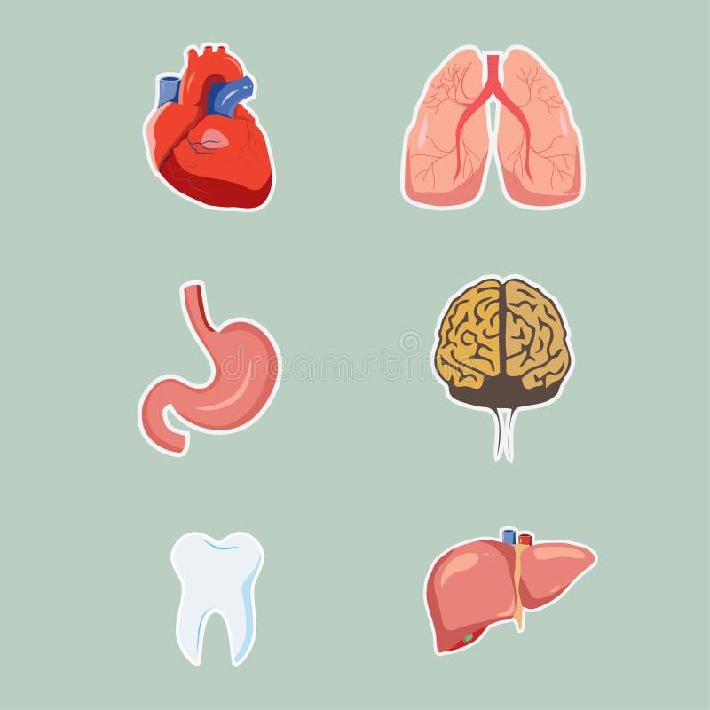 Menselijke vectororganen stock foto's