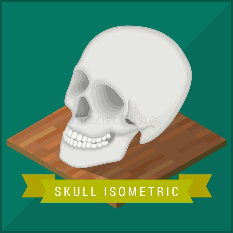 Menselijke vlak isometrische schedel cranium vector illustratie