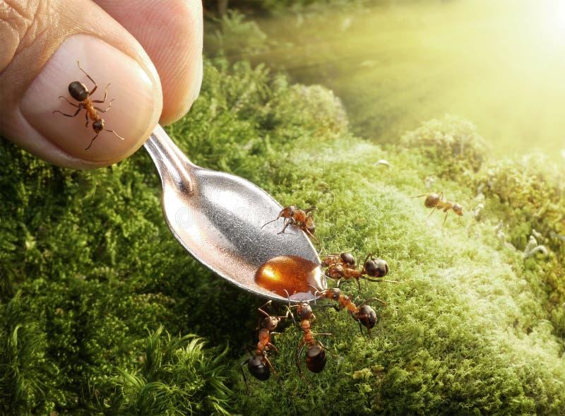 Menselijke voedende mieren met stroop royalty-vrije stock foto