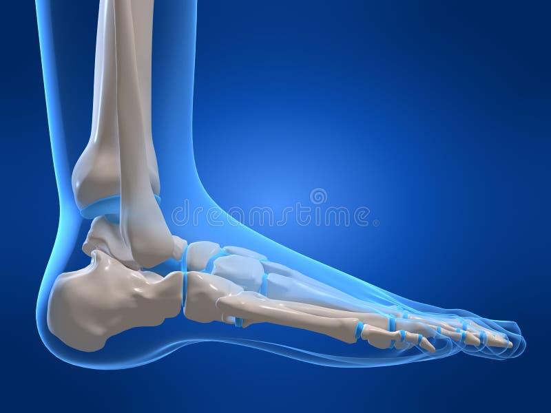 Menselijke voet royalty-vrije illustratie