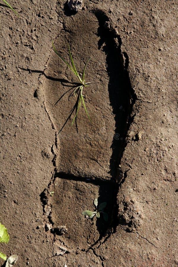 Menselijke voetafdruk in een kleivloer, installatie het groeien stock fotografie
