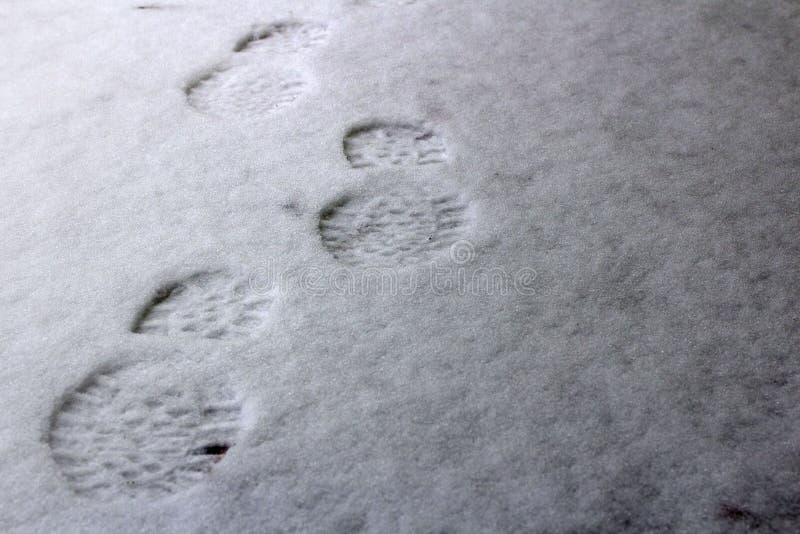 menselijke voetafdrukken op de eerste sneeuw stock foto's