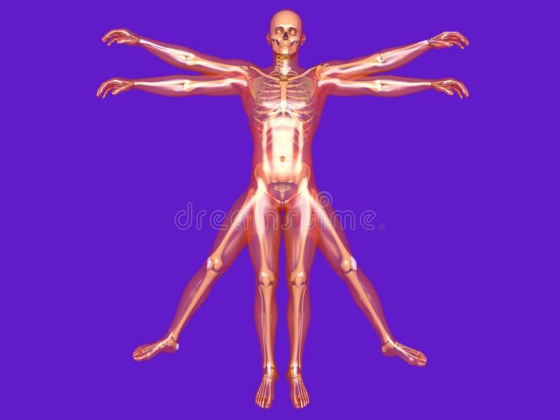 Menselijke vorm vector illustratie