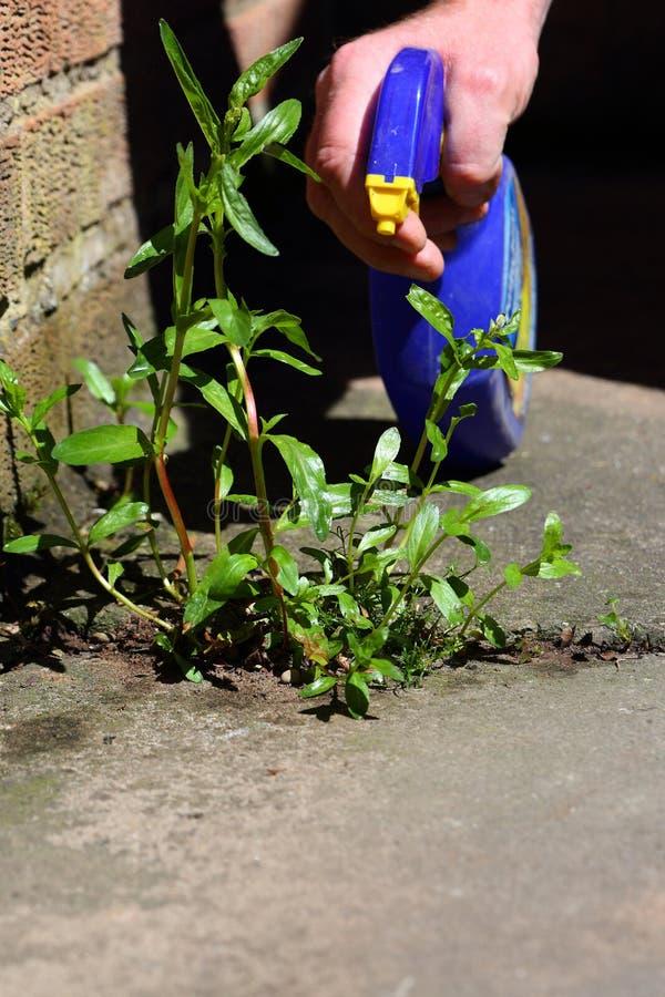 Mensen bespuitend herbicide op een onkruid royalty-vrije stock fotografie