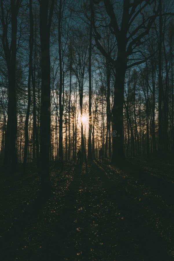 Mensen in bos bij dageraad royalty-vrije stock afbeelding