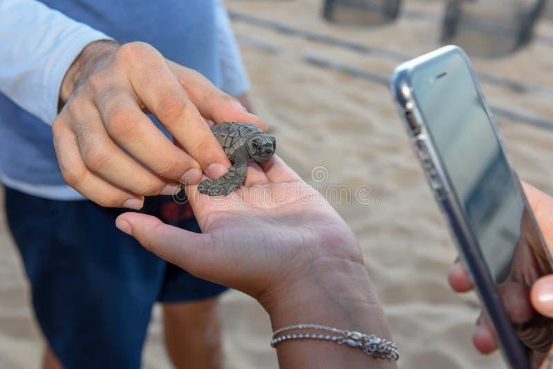 Mensen die babyschildpadden op Tamar-project in Praia do Forte in Brazili? waarnemen stock afbeelding